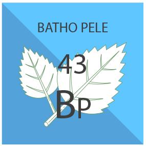 Batho Pele